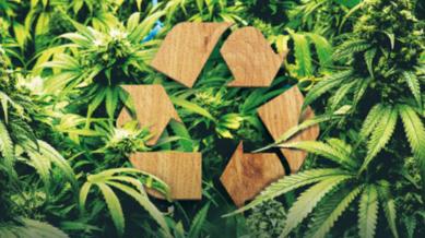 Green Marijuana