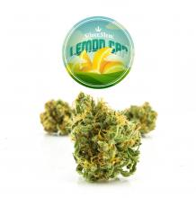 Lemon Cap | Sativa