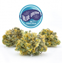 Blue Dream | Indica-Hybrid