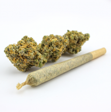 Dutch Treat Haze Flower Preroll | Sativa