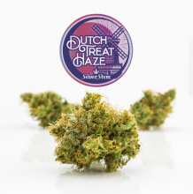 Dutch Treat Haze | Sativa